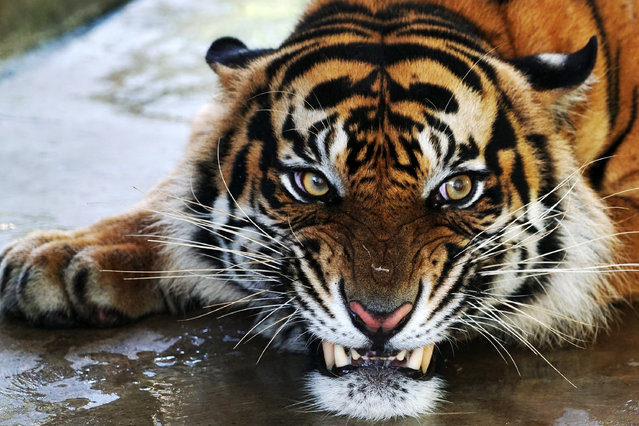 Some Photos: Animals